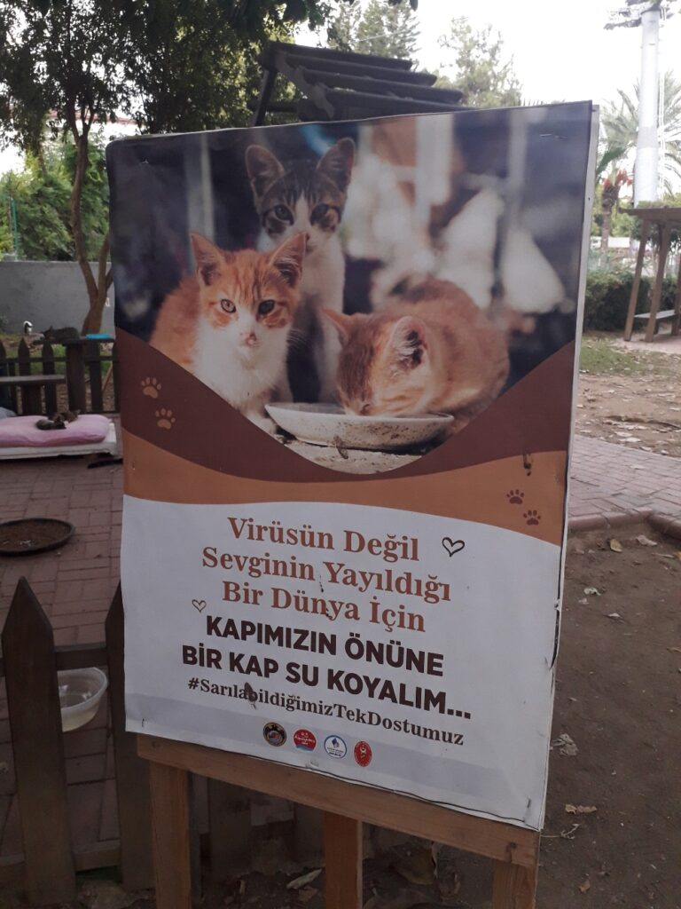Коти Туреччини