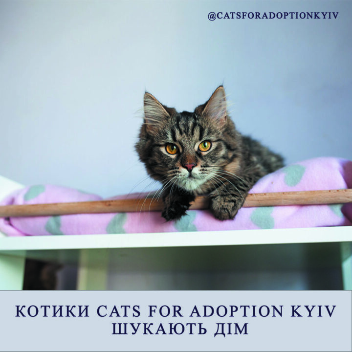 Котики Cats for adoption Kyiv