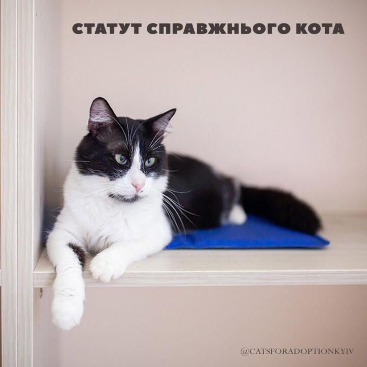 Справжній кіт