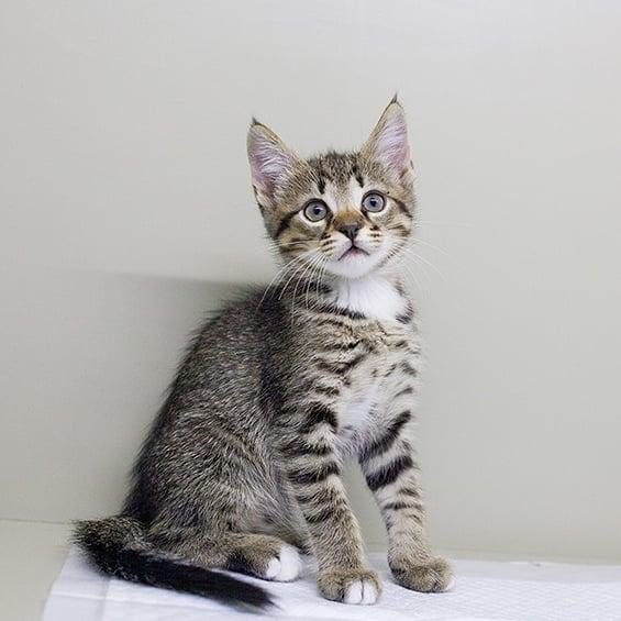 Правила адаптації котиків