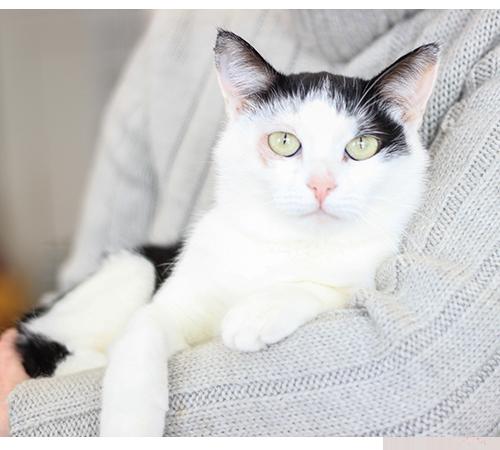 Притулок для котів