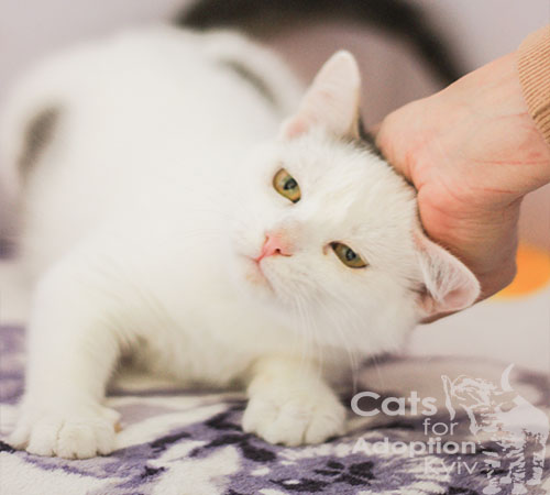 7 знаків любові котика