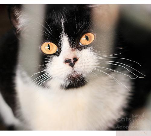 Котики притулку сіріус