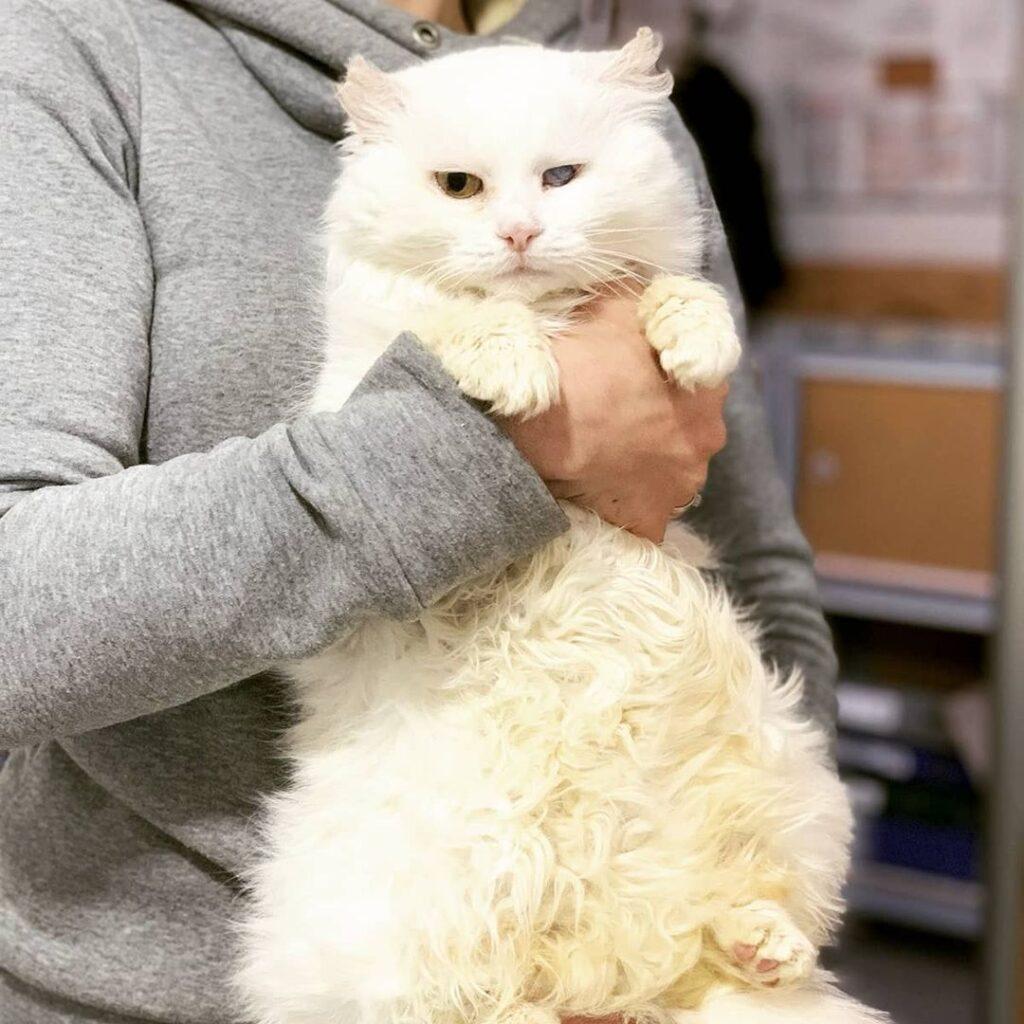 пухнаста кішка