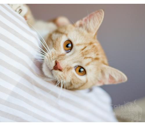 День котиків