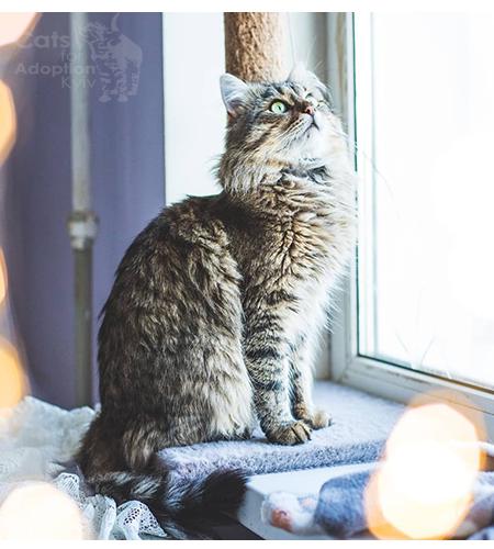 Хочу пухнастого і ніжного кота. Дізнайся про котофакти в день кота.