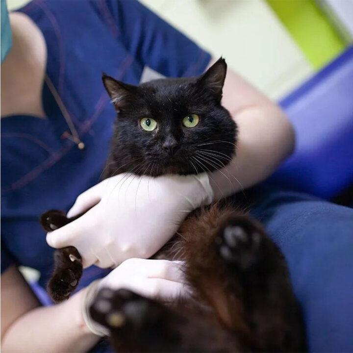 Кіт Чорниш