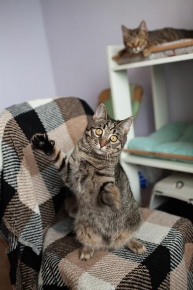 Котики Cats for adoption Kyiv