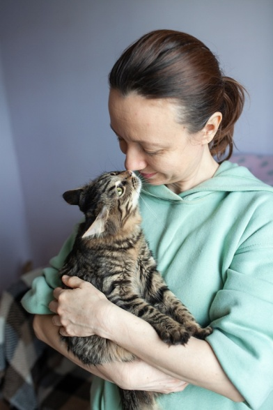 проєкт cats for adoption Kyiv