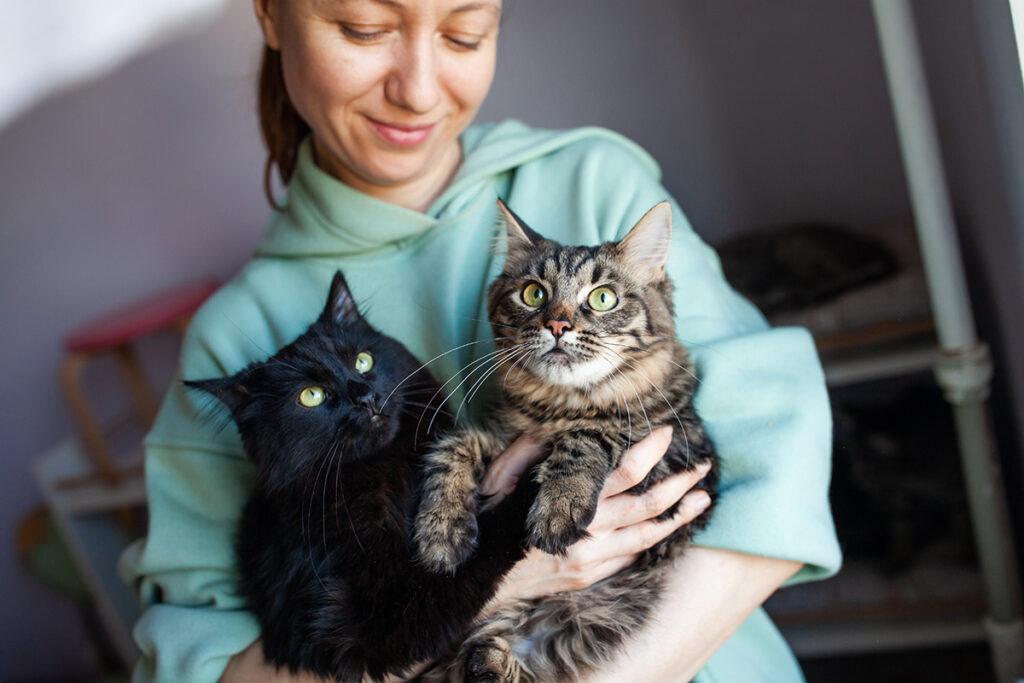 Смокі чорній кіт