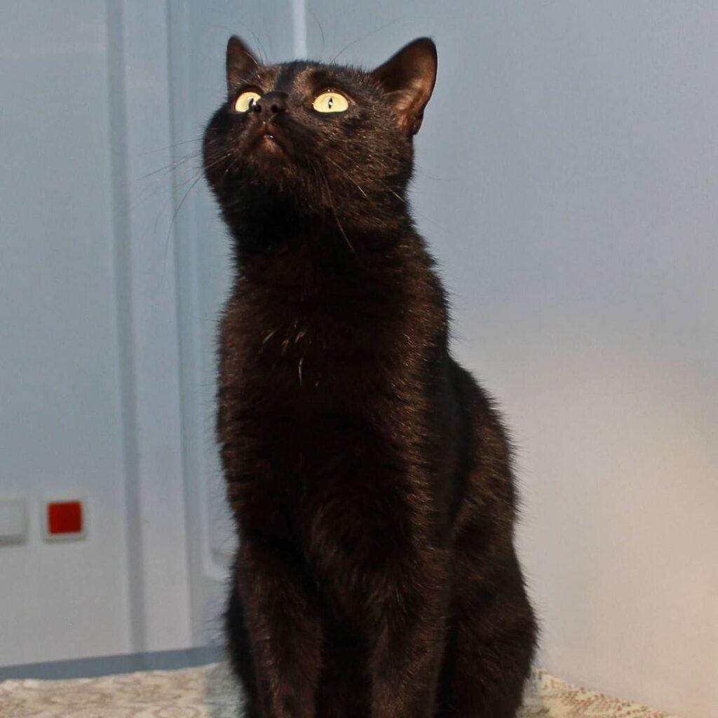Чорний молодій кіт, шукає дім.