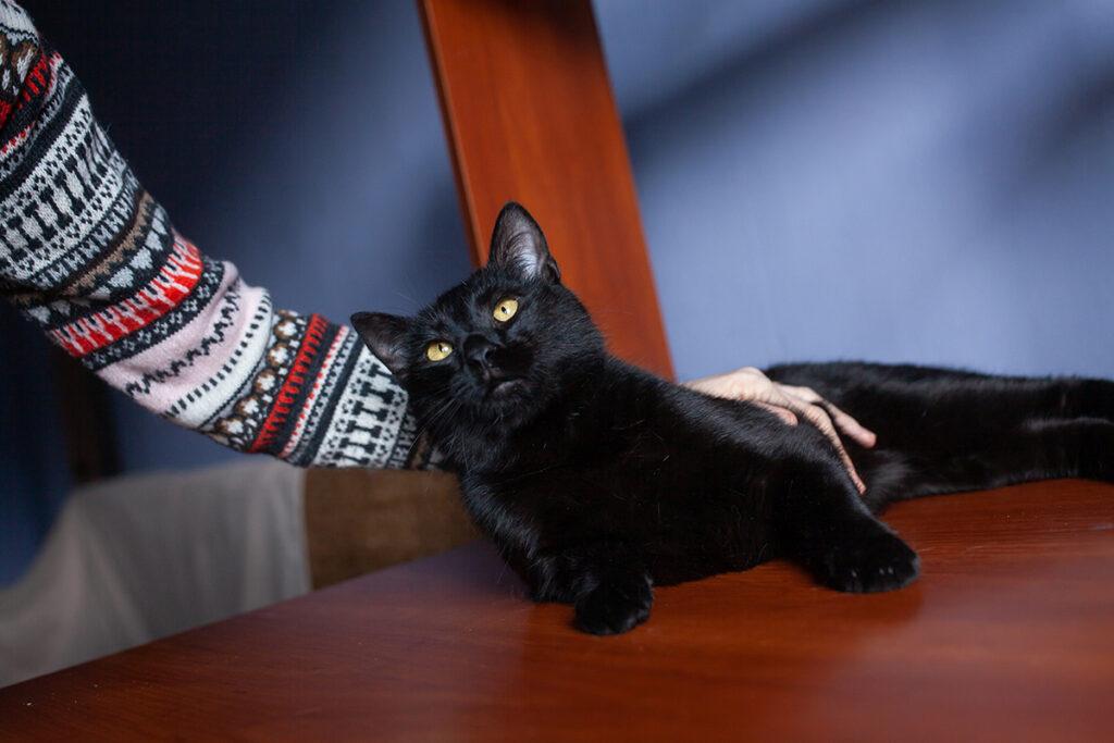 Ластік чорний кіт