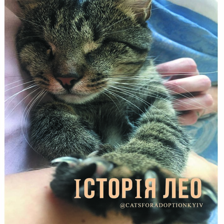 котик Лео