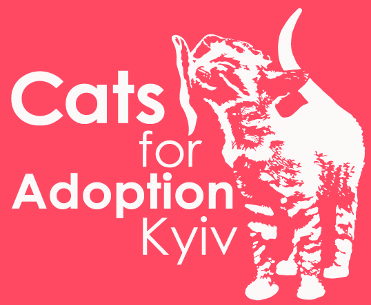 Cats for Adoption Kyiv