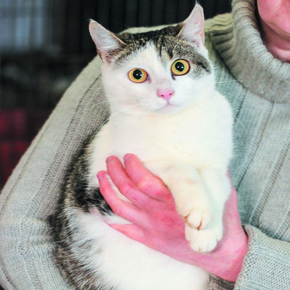 Мартін кіт