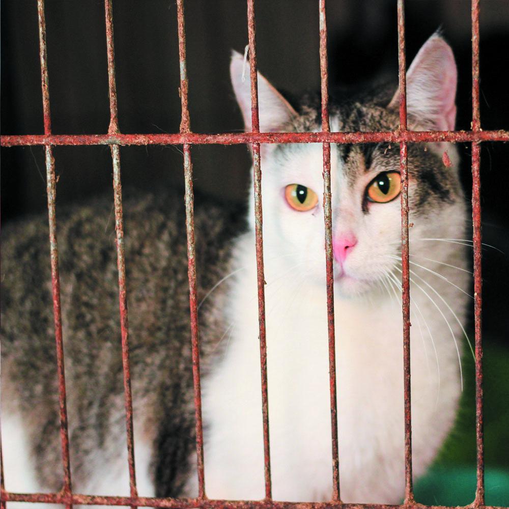 Кіт в клітці