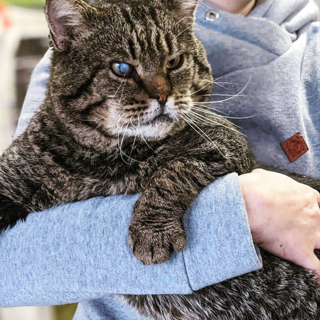 Матроскін великий кіт
