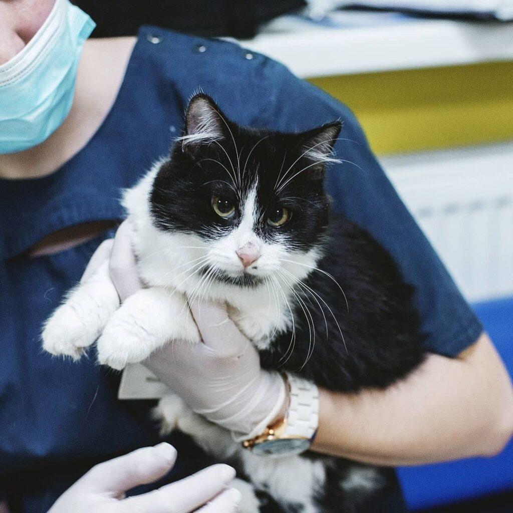 Чорно білий котик в притулку в Києві