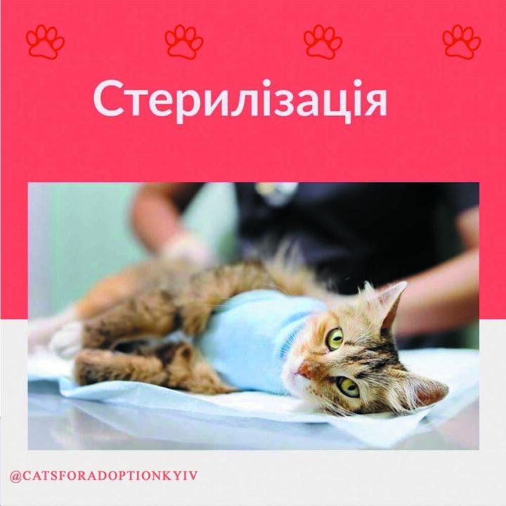 Стерилізація котиків