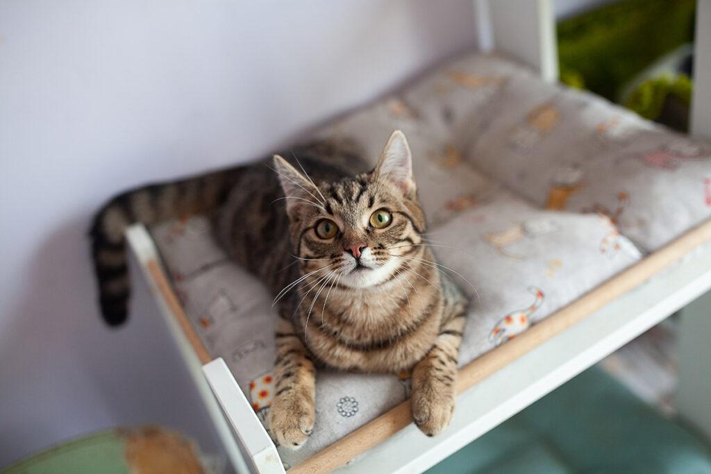 Тоффі кошеня