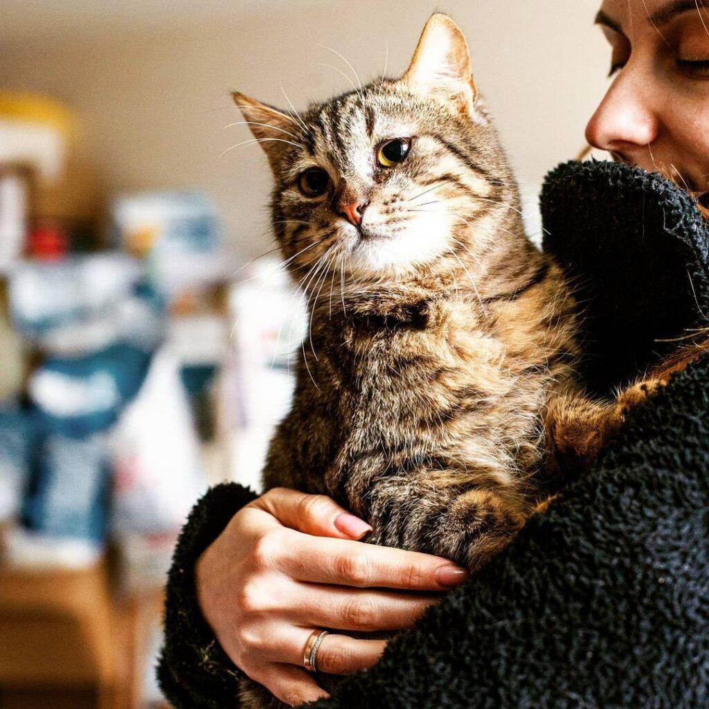 Кішка Туся - котик шукає дім