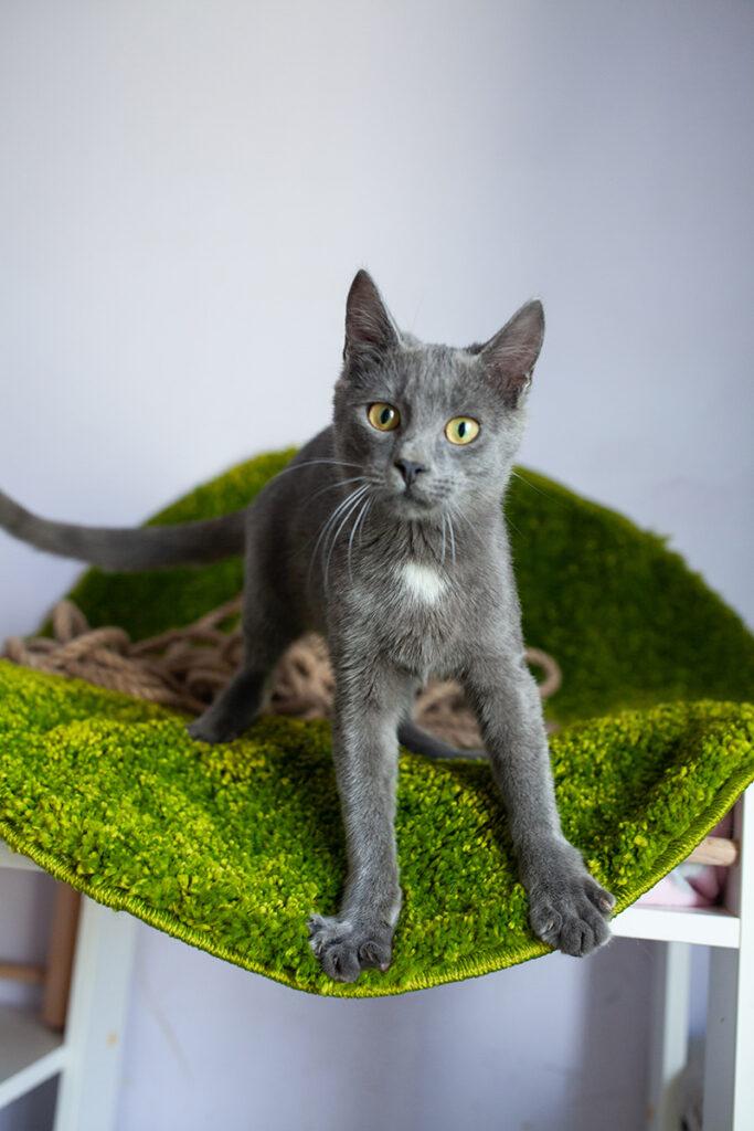 Сірий котик Зайка