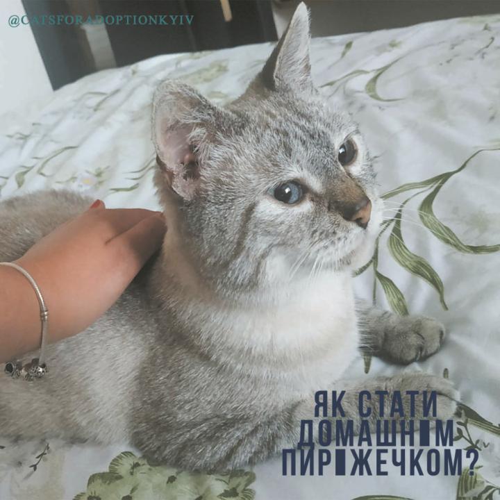 История кота
