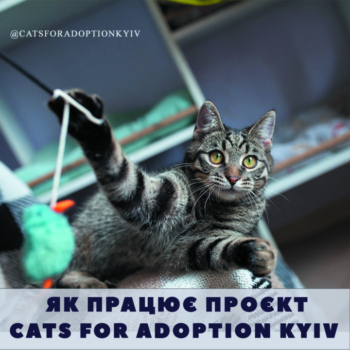 проєкт cats for adoption Kyiv