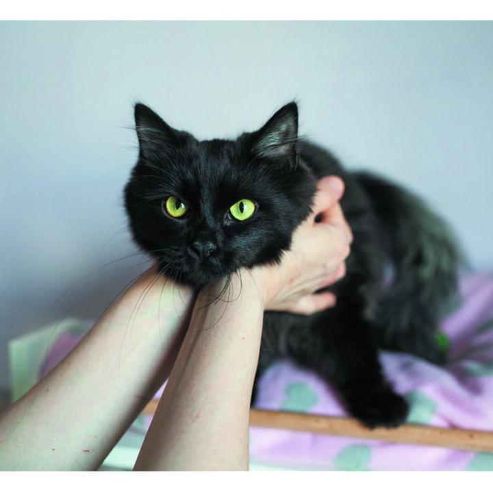 чорній кіт