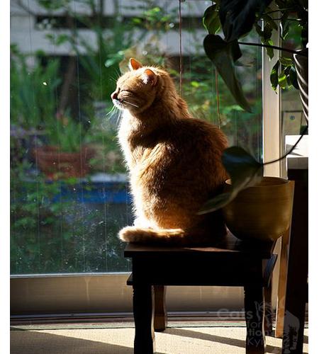 сонце та коти