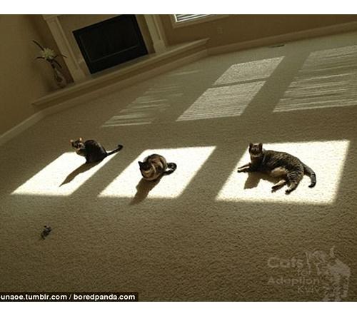 Котячий культ сонця