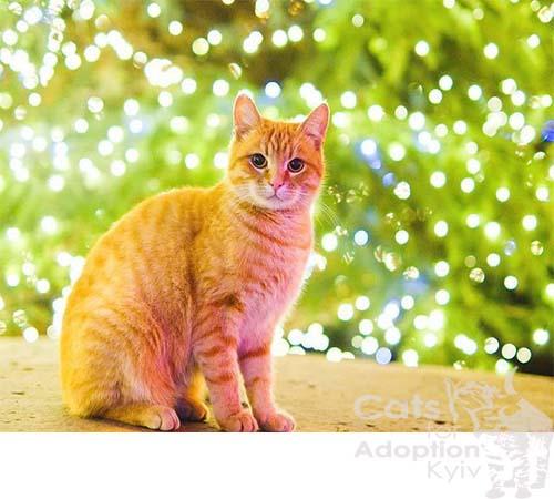 Вітання з новим роком від котиків