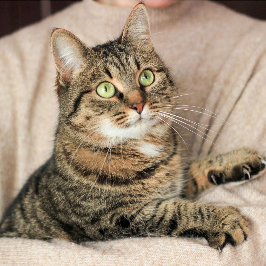 Котик Ладушка шукае дім