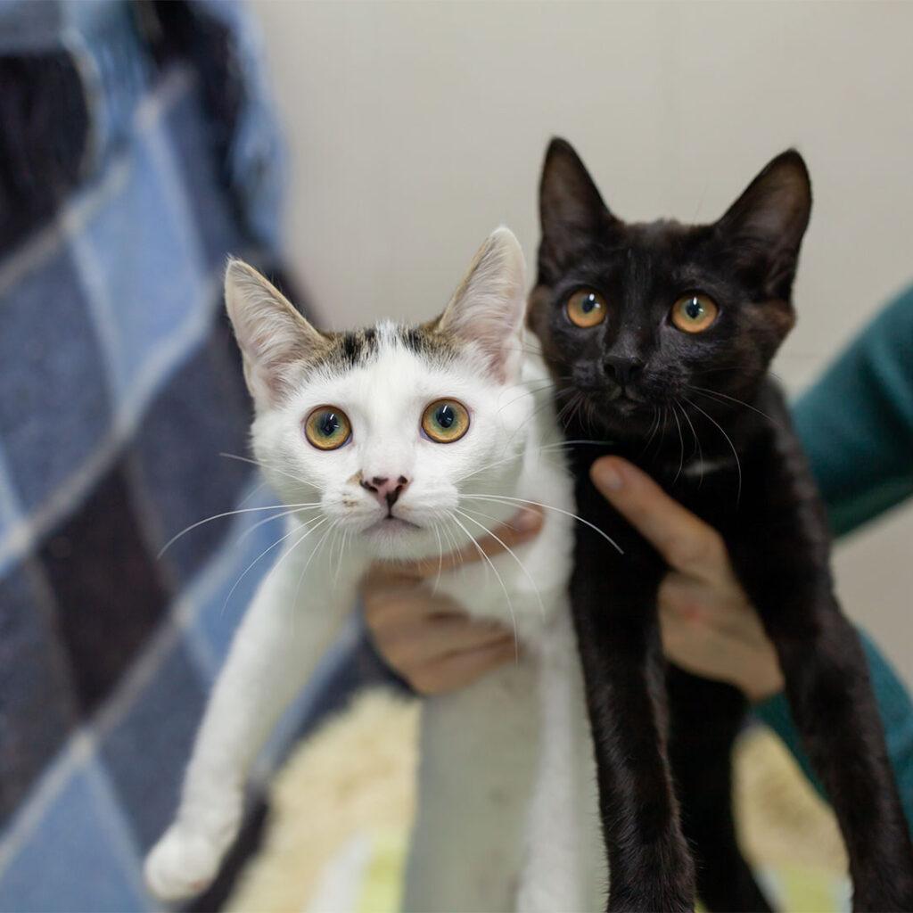 Котики Соня і Фаня